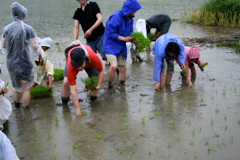 Taue: Rice Planting in Rural Kyoto Prefecture