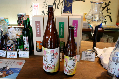 Kyoto Sake: Learning to Make Umeshu in Fushimi (北川本家はんなり梅酒