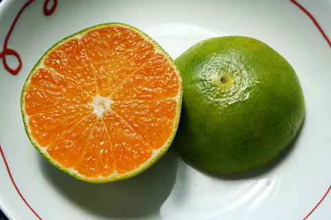 Japanese Fruit: End of Summer Aomikan 青みかん