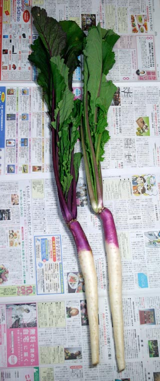 How to Make Nukazuke: Pickling Hinona Turnips 日野菜かぶ ぬか漬け