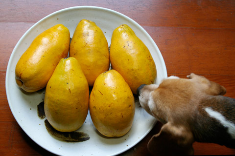 Karinshu: Japanese Quince Liqueur  花梨酒