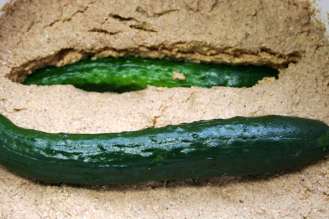 Kyoyasai: Garden Grown Cucumber Nukazuke 京野菜ぬか漬け